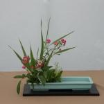 Bonsaidagen Delft  juni 2015 (13)