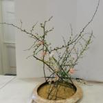f Japanse kwee, Forsythia, witte Prunus en dubbele roze Anemonen