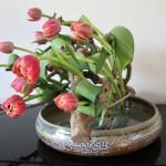 tulpen-van-het-bloemenvrouwtje-mrt-2020-II-JeroenVermaas