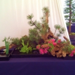 bonsaiweekenddelftjuni2013-10